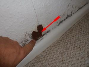 Schimmelpilz in der Wohnung an de Fußleiste