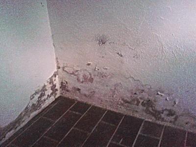 Keller feucht wie trocken machen Putzabplatzungen Farbabplatzungen Ausblühungen