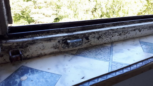 Küchenfenster verschimmelt Schimmelgutachter, Nutzer lüftet nicht Schimmelpilz, falsch ist mangelndes Lüftungsverhalten