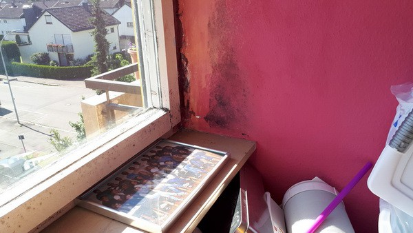 Kinderzimmer Fensterleibung verschimmelt Schimmelgutachter Mieter lüftet nicht Schimmelpilz